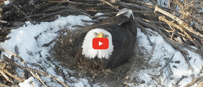 DNR's Eagle Cam