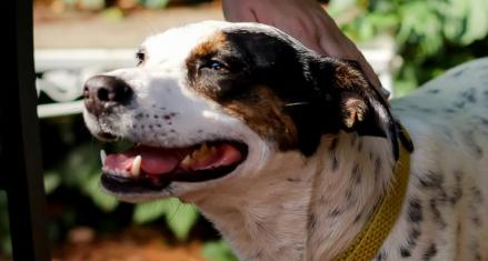 10 Dog-Friendly Saint Paul Patios