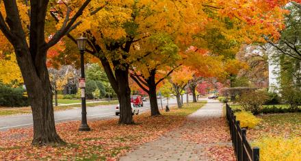 Your Fall in Saint Paul Weekend